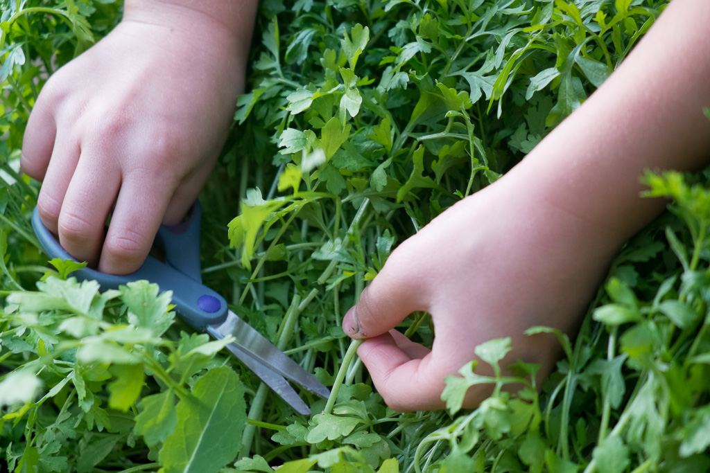 rośliny i zioła lecznicze